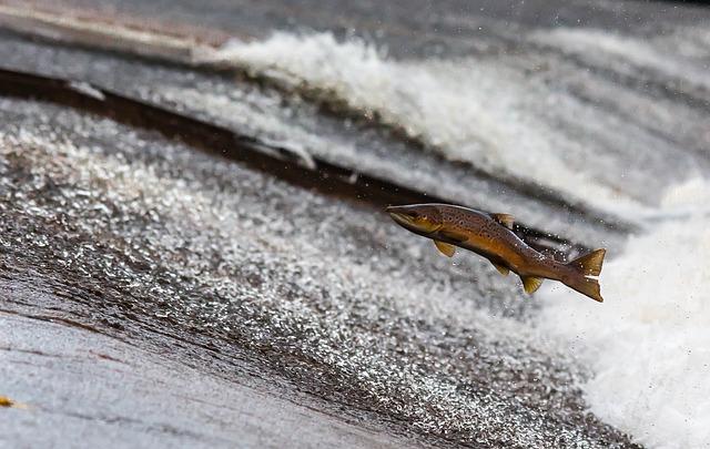 Fischöl wird aus dem Fett von Kaltwasserfischen gewonnen