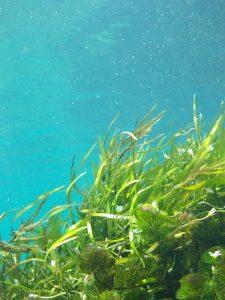 Statt Fischöl kann auch Algenöl gekauft werden