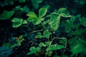 MSM gelangt über den Regen in Pflanzen und Tiere