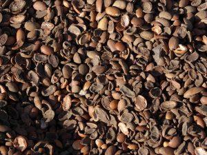 Arganöl - die Schalen der Früchte bleiben übrig