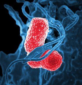 Hefepilzinfektion mit der Candida Diät bekämpfen