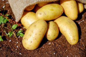 Kartoffeln sind bei der Ketogenen Diät so gut wie tabu