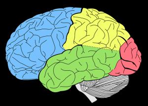 Das Gehirn wird beim Abnehmen durch Hypnose umprogrammiert