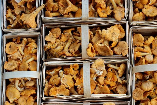 Low Carb Rezepte vegetarisch - selten kann auf Pilze verzichtet werden